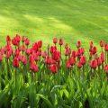 Comment rendre son jardin plus spacieux.
