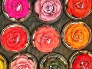rose-sous-cloche